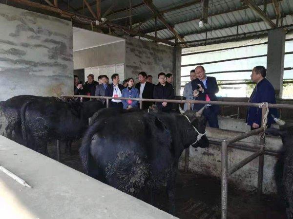 旌德县人大开展《中华人民共和国动物防疫法