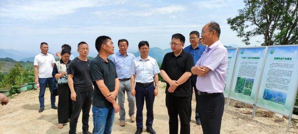 县人大常委会开展全县林业产业发展助推乡村